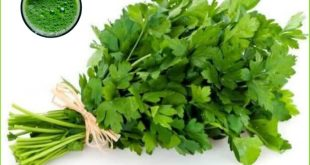 the parsley benefits for body health for adults and children